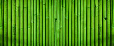 Texture en bambou verte de barrière, fond en bambou de texture Images libres de droits