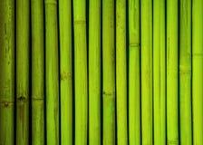 Texture en bambou verte de barrière, fond en bambou, fond de texture, texture en bambou Photo stock