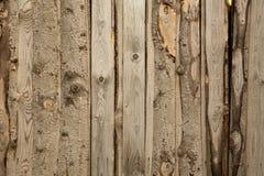Texture en bois Photographie stock libre de droits