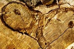 Texture en bois. Images libres de droits