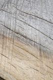 Texture en bois #2 de deux sons Images stock