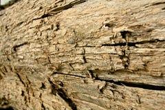 Texture en bois 01 Images libres de droits