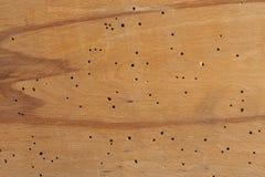 fond en bois avec des trous de termite stock images 24 photos. Black Bedroom Furniture Sets. Home Design Ideas