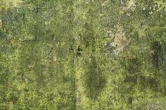 Texture en bois, avec le regard superficiel par les agents, vieux et vert Photo libre de droits
