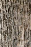 Texture en bois avec les modèles naturels, vieux panneaux de fond, Photo libre de droits