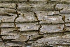 Texture en bois avec les modèles naturels, vieux panneaux de fond, le b Photo stock