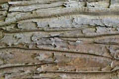 Texture en bois avec les modèles naturels, vieux panneaux de fond, le b Photographie stock