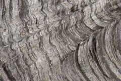 Texture en bois brute photo libre de droits