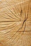 Texture en bois criquée Photographie stock libre de droits