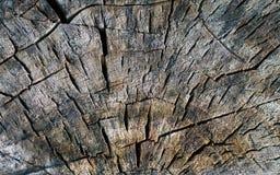 Texture en bois criquée Plan rapproché Photo stock