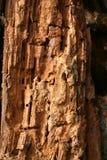 Texture en bois décomposée Images libres de droits