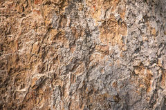 Texture en bois d'écorce Photographie stock