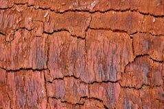 Texture en bois d'écorce Images libres de droits