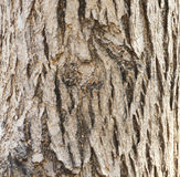 Texture en bois d'écorce photographie stock libre de droits