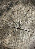 Texture en bois d'anneaux d'arbre vieille comme fond, en coupe Image libre de droits