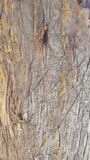 Texture en bois d'arbre photo libre de droits