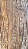 Texture en bois d'arbre Photos libres de droits