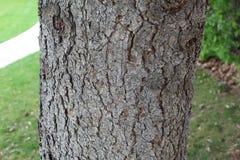 Texture en bois d'?corce d'arbre images stock