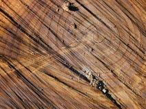 Texture en bois d'Interestig Image stock