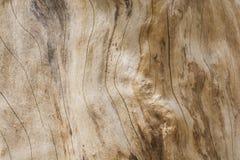 Texture en bois d'un arbre Image libre de droits
