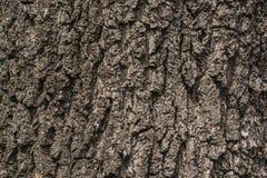 Texture en bois d'un arbre Photo stock
