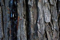 Texture en bois d'un arbre photographie stock libre de droits