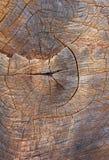 Texture en bois d'un tronc d'arbre, texture de fond Images libres de droits