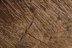 Texture en bois d'un tronc d'arbre, texture de fond Image libre de droits