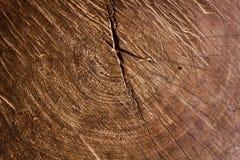 Texture en bois d'un tronc d'arbre, texture de fond Photo stock