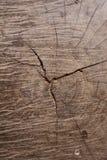 Texture en bois d'un tronc d'arbre, texture de fond Photographie stock libre de droits