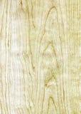 Texture en bois de bouleau Image libre de droits