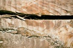 Texture en bois de Brown vieille Fond abstrait, calibre vide photo stock