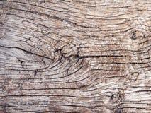 Texture en bois de chêne Photographie stock libre de droits