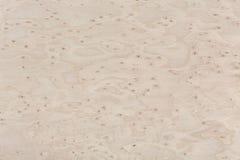 Texture en bois de conception d'érable Plan rapproché de fond naturel photo stock