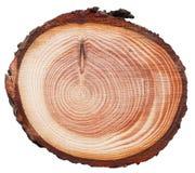Texture en bois de coupe de croix de tronc d'arbre d'embardée photographie stock