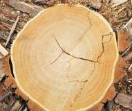 Texture en bois de coupure Images libres de droits