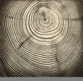 Texture en bois de coupure image libre de droits