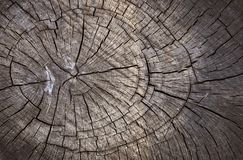 Texture en bois de coupure Photographie stock libre de droits