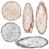 Texture en bois de croquis d'arbre de tronc illustration stock