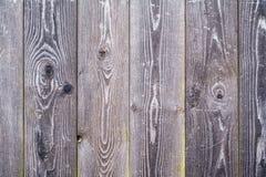 Texture en bois de fond avec de la mousse verte Images stock