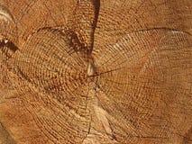 Texture en bois de fond coupé de tronc d'arbre images libres de droits