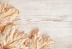 Texture en bois de fond et feuilles, planche en bois blanche, automne Photographie stock