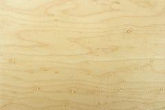 Texture en bois de hêtre Photographie stock