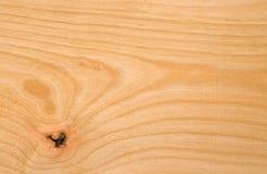 Texture en bois de hêtre Photos libres de droits