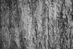 Texture en bois de jati avec Java-Centrale rentré par couleur noire et blanche photo stock
