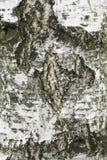 Texture en bois de montagne Photographie stock libre de droits