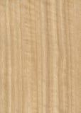 Texture en bois de placage d'eucalyptus Images stock