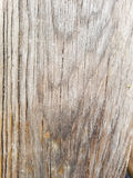 Texture en bois de texture images libres de droits