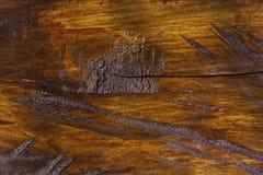 Texture en bois de tronc d'arbre coupé, plan rapproché photographie stock libre de droits
