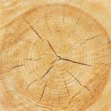 Texture en bois de tronc d'arbre cutted photo libre de droits
